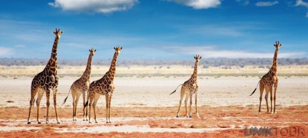 Partir en voyage en Afrique : les précautions à prendre